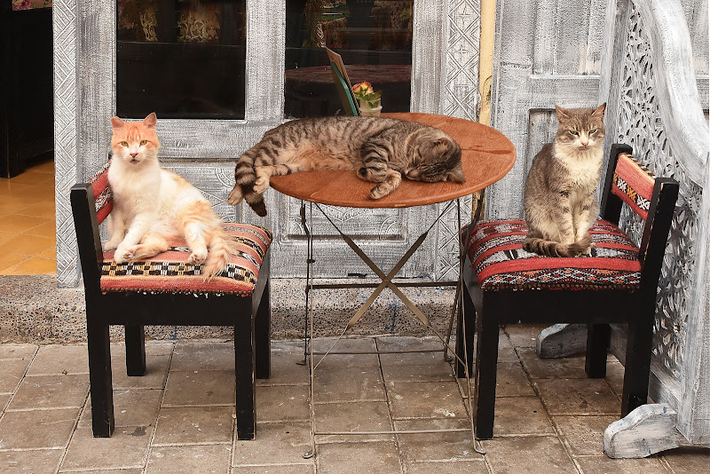 ...Eravamo tre a (mici) al bar... di BASTET-Clara