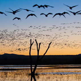 Bosque del Apache by Gorazd Golob - Landscapes Travel