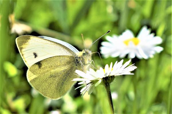 Farfalla in fiore di BNNRRB