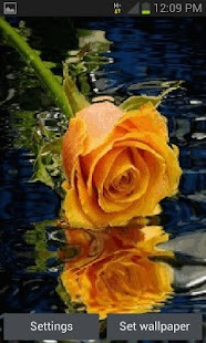 Yellow Rose Reflection LWP - náhled
