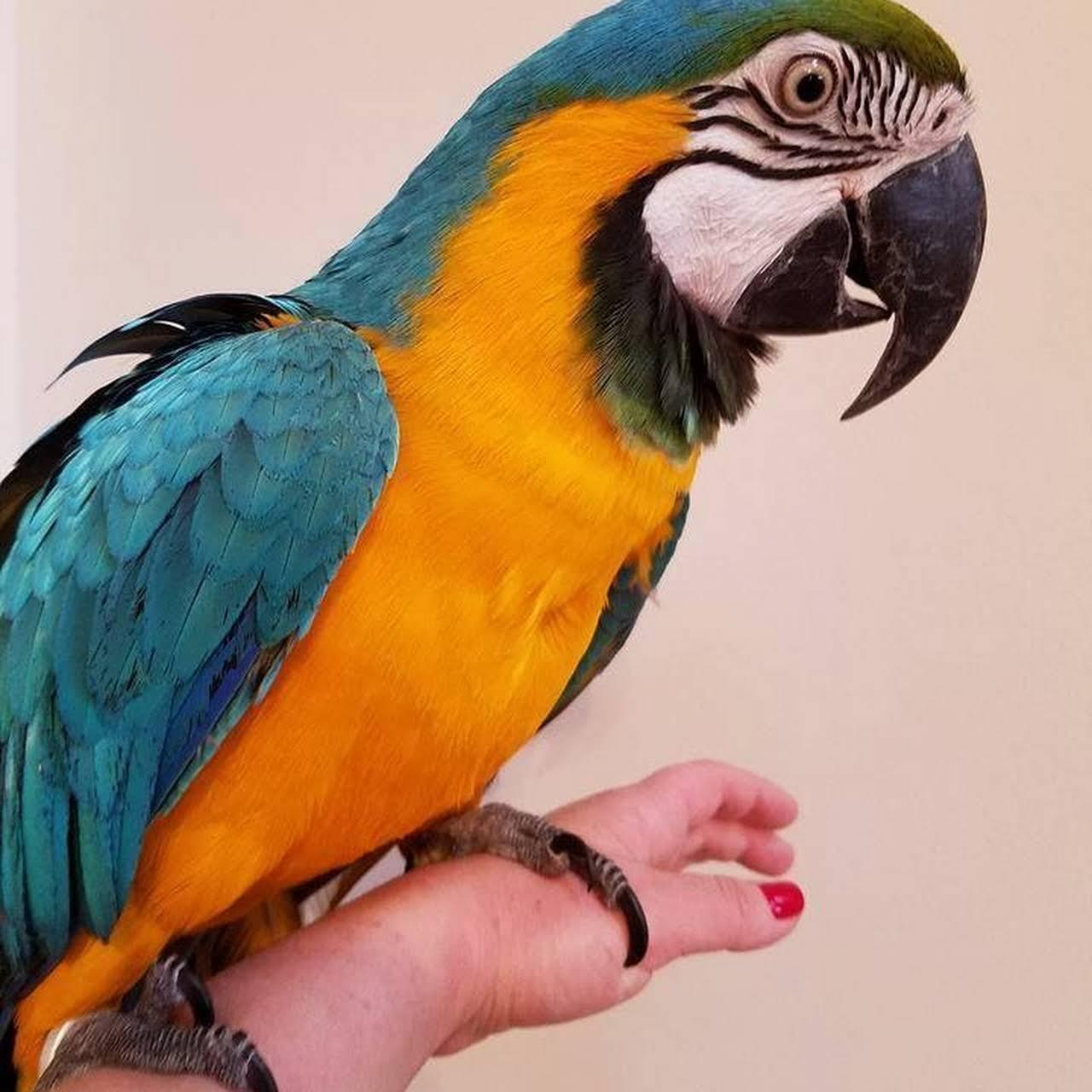 Macaws N Parrots - Bird Shop