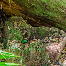 Heart Shaped tree trunk base by Taz Graham - Nature Up Close Trees & Bushes ( hearts, nature, trees, landscapes, photography,  )