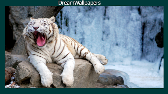 how to download white tiger wallpaper 13 mod apk for
