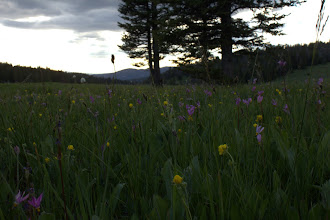 Photo: Wildflower meadow in the Gravely Range