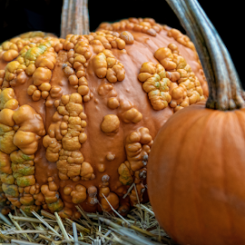by Judy Rosanno - Public Holidays Halloween ( autumn foliage, new england, fall 2018 )
