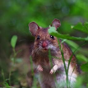 by Zeljko Padavic - Animals Other Mammals