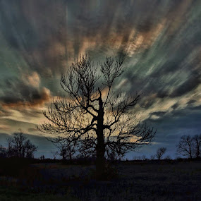 Enduring. by Jim Dawson - Novices Only Landscapes ( #landscape, #clouds, #colors, #sunset, #tree, #kentucky )