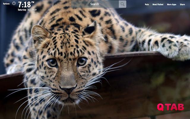Jaguar New Tab Jaguar Wallpapers