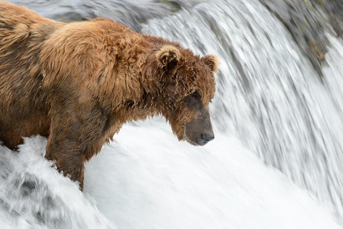 Katmai NP Alaska