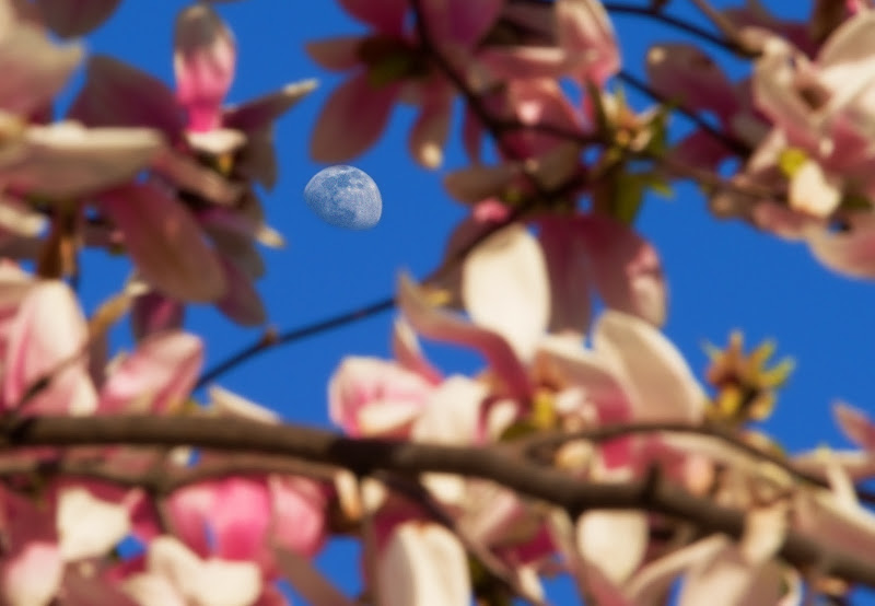 La Luna in fiore di gaspare_aita