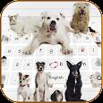 Love kitty dog keyboard theme