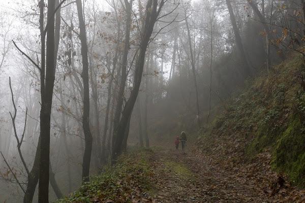 Passeggiata nel bosco di mirella_cozzani