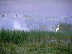 Photo: The lake at Kabini is home to a mass of bird life right near the resort.