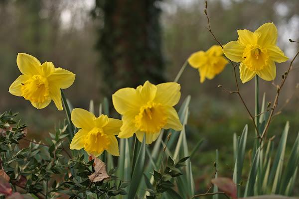fiori gialli di SALVATORE PETRENGA