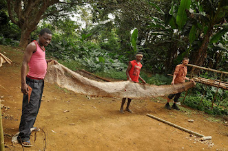 Photo: almost 6 m long skin of a huge python