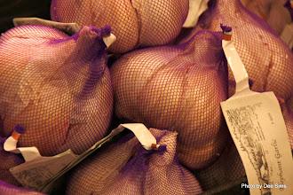 Photo: (Year 2) Day 339 - Elephant Garlic