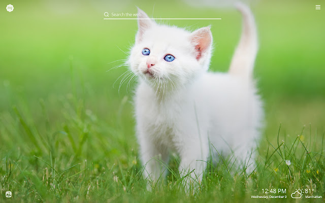 My White Cat HD Wallpapers New Tab Theme