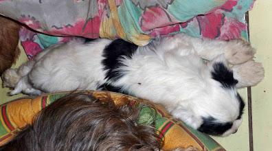Photo: Ich kann auch in der Lücke schlafen