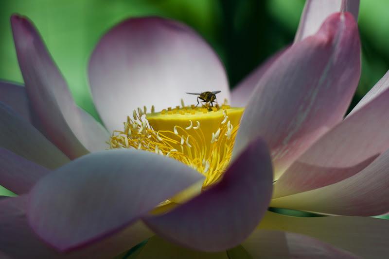 anche le api fanno colazione al bar la mattina di Ltz/rivadestra