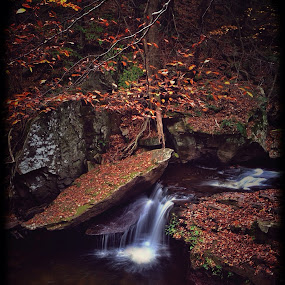 Aaron's Cascade by Aaron Campbell - Instagram & Mobile iPhone ( falls trail, 2013, autumn, foliage, cascade, kitchen creek, state park, glen leigh, slowshutter, october, leaves, ricketts glen, fall, color, colorful, nature )