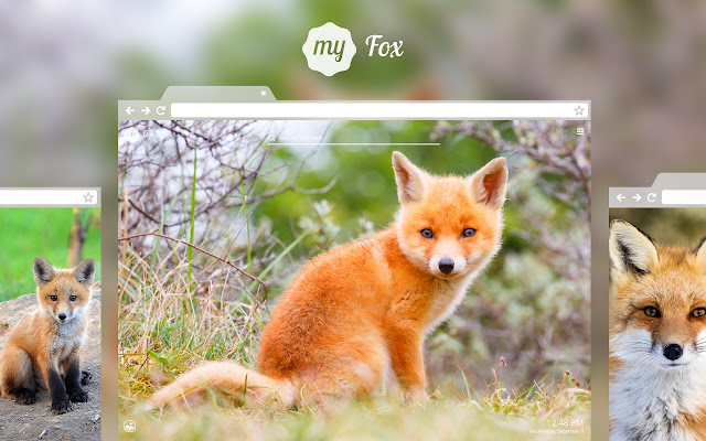 My Fox - Cute Foxes HD Wallpapers