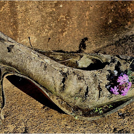 Old shoe by Marissa Enslin - Digital Art Things