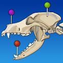 vet-Anatomy icon