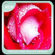 Rose pink water drop wallpaper