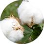 El algodón