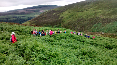 Photo: Rambling through a maze of fern on the first day of Paddy Bourke's trip to Wicklow, July 12th and 13th, 2014.
