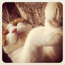 Photo: Sleeping is his main job! #intercer #cat #pet #cats #pets #meow #petsofinstagram #beautiful #cute #cutie #animal #picpets #sweet #kitty #kitten #catlovers #portrait #pretty #funny #paw #paws #ears #fur #catsofinstagram #eyes #nose - via Instagram, http://instagr.am/p/OpFMtjpfvD/