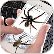 Spider on Screen – Funny Prank App APK