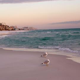 Destination Destin by Brenda Shoemake - Landscapes Beaches (  )