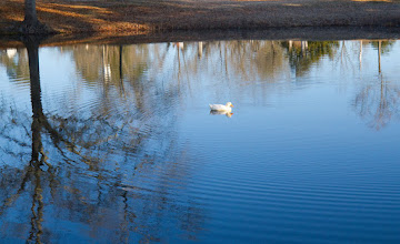 """Photo: This is the """"limestone sink"""" pond"""