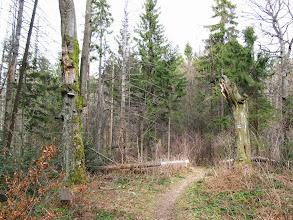 Photo: 10.Urokliwa leśna głusza.