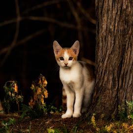 Sittin' Kitten by Dennis Roscher - Animals - Cats Kittens ( kitten, young, cat, shadows, trees,  )