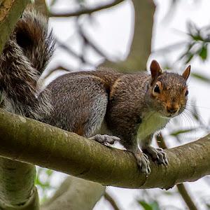 Squirrel (6).jpg