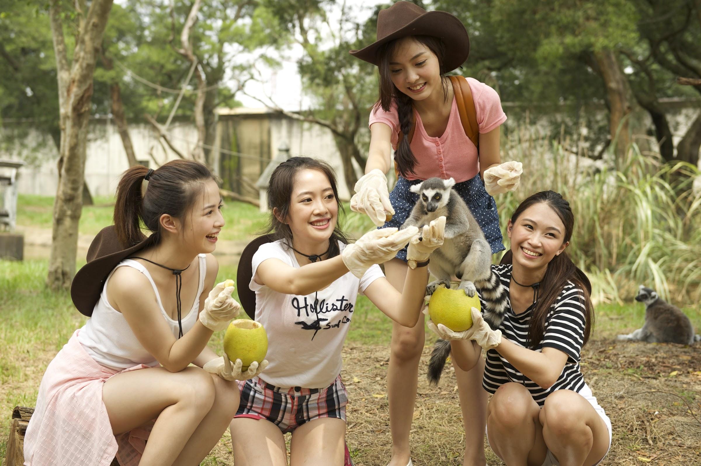 六福村-環尾狐猴餵食課程