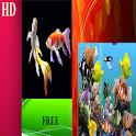 Koi & Aquarium Live Wallpapers icon