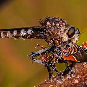rbrfly w moth on brnch y.jpg