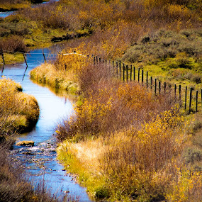 Wyoming Stream by Richard States - Landscapes Prairies, Meadows & Fields ( field, stream, autumn, wyoming, landscape, fence line, fall color,  )