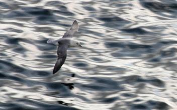 Photo: Sea Gull over the North Sea