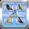 Todos em 1-Cantos dos Pássaros