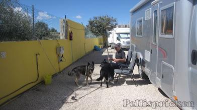 Photo: Platsen vi bokat är vi mera än nöjda med, kvällssol och lite avskärmat så hundarna får lugn och ro