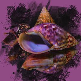 Sea Shells by Dave Walters - Digital Art Things ( sea shells, nature, colors, digital art, lumix fz2500,  )