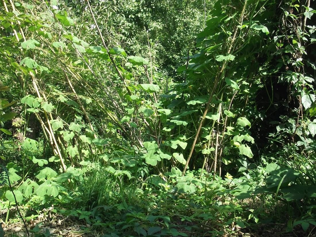 Erdőkert árnyékban 1.JPG