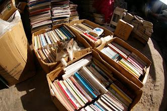 Photo: Chat tranquille dans librairie du Souk