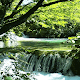 Forest River Live Wallpaper for PC-Windows 7,8,10 and Mac