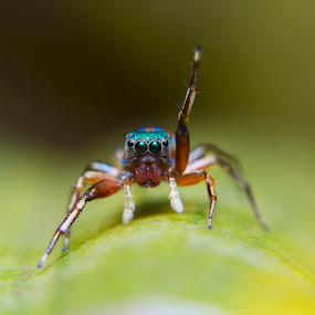 Hands Up! by Trisviadi Effendi - Animals Insects & Spiders