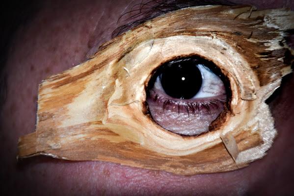 L' occhio del bosco di laura62